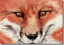 Red Fox - Tricia Griffith