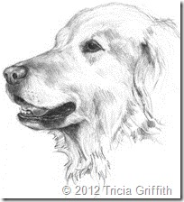 Golden Retriever - Tricia Griffith