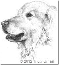 Golden Retriever - Tricia Griffith