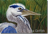Great Blue Heron - Tricia Griffith