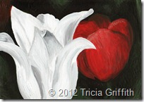 White Tulip - Tricia Griffith