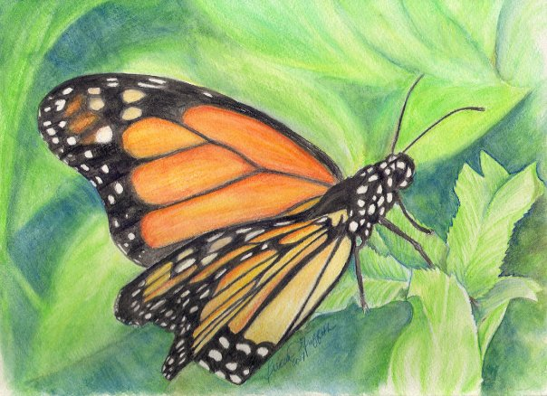 monarch butterfly aquarelle watercolor
